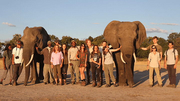 study abroad students with elephants in Botswana